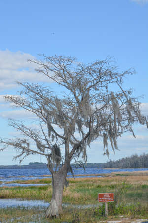 Beautiful view of Lake Louise in the wetlands of Clermont, Lake County, Florida 免版税图像