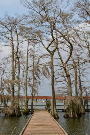 Moss draped Cypress trees in Lake Bruin on the Mississippi River at St Joseph, Tensas Parish, Louisiana