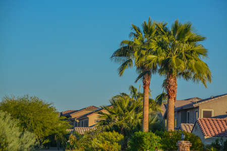 Beautiful view of the palm trees and plants in the southwest desert in Peoria, Maricopa County, Arizona