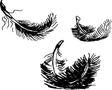 set of ink sketces of black swan feathers vector isolated hand drawn