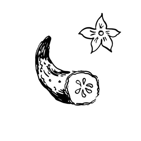 half of fresh cucumber with a blossom. hand drawn ink sketch. vector illustration. isolated Ilustracja