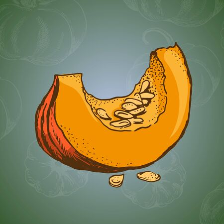 section of pumpkin vector colour illustration on green backround witch chalk doodle Çizim