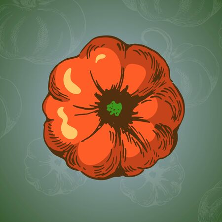 pumpkin top view colour illustration on green backround witch chalk doodle