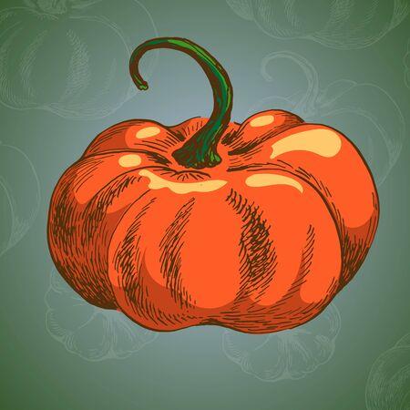 orange pumpkin vector colour illustration on green backround witch chalk doodle Çizim