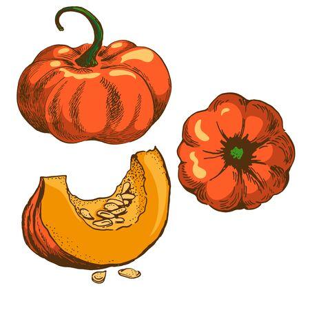 pumpkin vector colour illustration set isolated