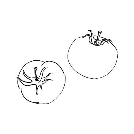 vector sketch of two tomatos. outline drawing