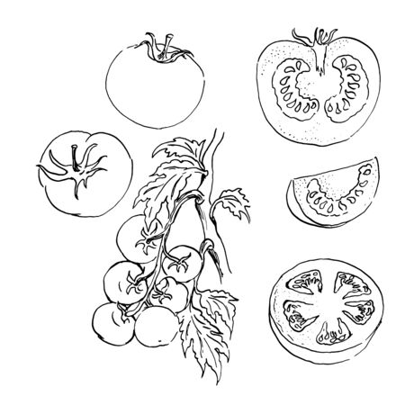 vector sketch set of tomatos. outline drawing. black and white. isolated