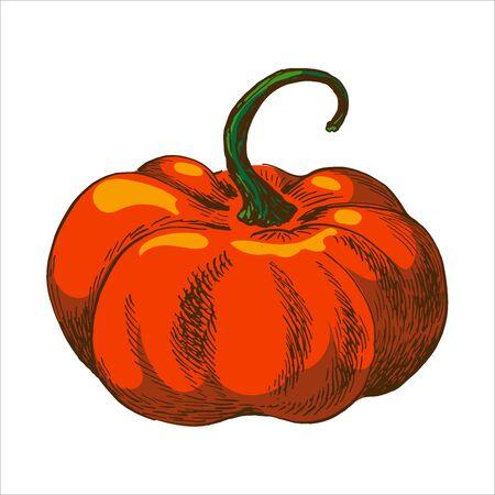vector illustration of pumpkin. orange colour illustration isolated