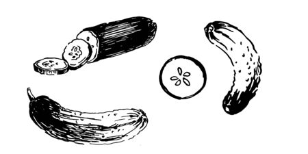 fresh cucumber and slices. set hand drawn ink sketch. vector illustration  イラスト・ベクター素材