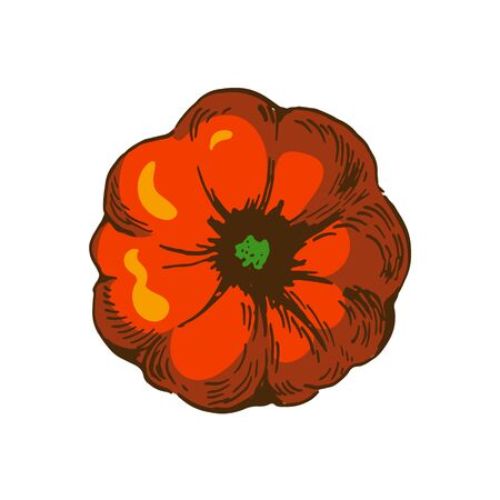 vector illustration of pumpkin top view. orange colour illustration isolated