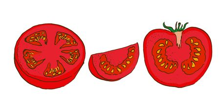 vector colour sketch of cut tomatos doodle style. hand drawn  イラスト・ベクター素材