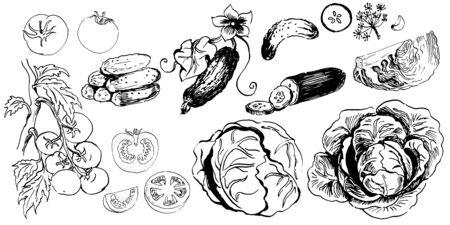 set of ink sketches of vegetables. hand drawn ink sketch. vector illustration. isolated
