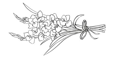 Vector hand drawn gladiolus isolated on white background. Outline flower are element for design.  イラスト・ベクター素材