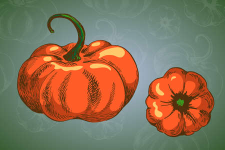 two pumpkin vector colour picture sketchy