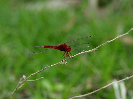 Dragonfly in Laos Фото со стока - 4908165