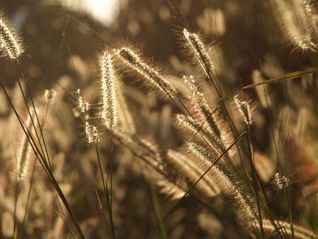 Sparkling grass in Thailand Фото со стока - 4908226