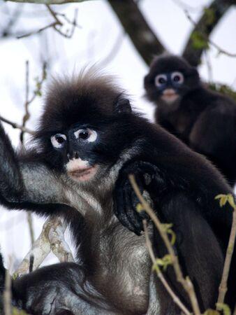 Monkeys in Angthong Marine National Park (Thailand) Фото со стока - 4908374