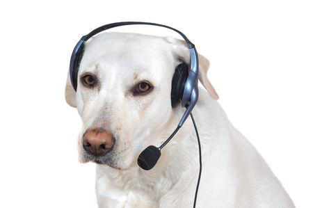 Dog support operator listening with headset on help lline Stock Photo