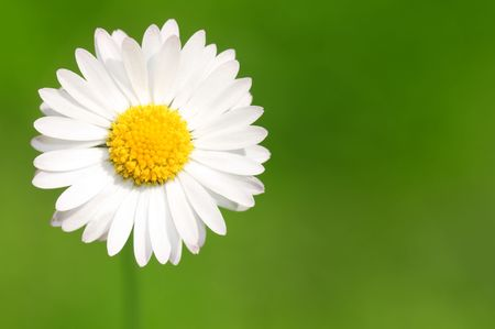 Abstract floral background with white daisy and large copy space Stock Photo