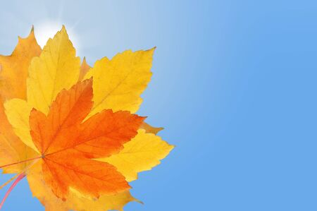 Falling autumn leaf on bright blue sky with shining sun Stock Photo
