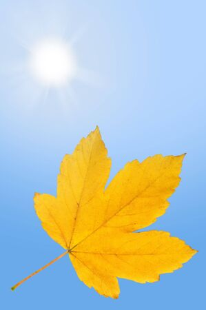 Falling autumn leaf on bright blue sky with shining sun photo
