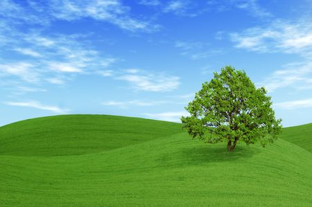 Green tree in the field with blue sky and white clouds.