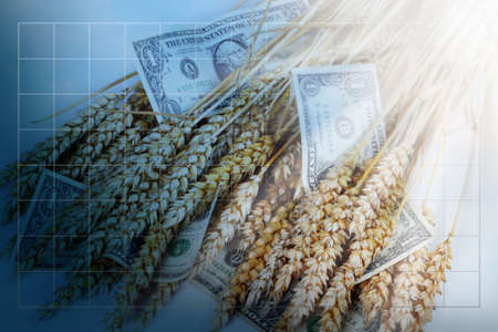 cash crop: Blue business background with grid and dollars and corn ears. Stock Photo