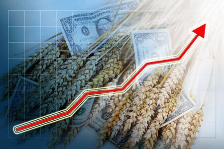 Blue business background with red rising graph, dollars and corn ears. Stock Photo