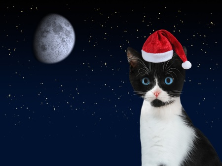 Black and white kitten with red Santa Claus cap and dark starry night sky with moon in the background. photo
