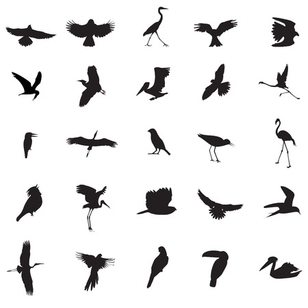 Bird illustrations Stock Vector - 4251040