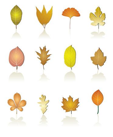 tree leaf icon Stock Vector - 4996567