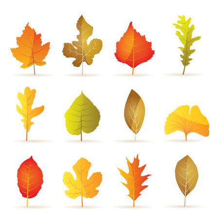 fichi: diversi tipi di albero autunno foglia Icone