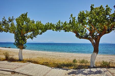 poros: Beach and trees on the beach of Poros, Kefalonia, Ionian Islands, Greece