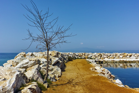 skala: Tree on the pier of Skala Sotiros, Thassos island, East Macedonia and Thrace, Greece