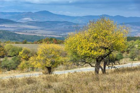 Amazing view of Yellow tree and Autumn view of Cherna Gora mountain, Pernik Region, Bulgaria