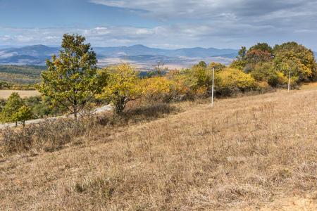 yellow trees: Autumn Landscape with yellow trees of Cherna Gora mountain, Pernik Region, Bulgaria