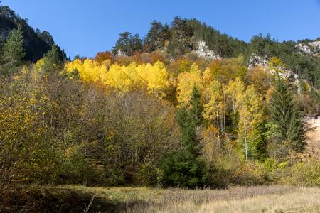 Amazing view of Yellow trees and Autumn view of Buynovsko gorge, Rhodope Mountains, Bulgaria