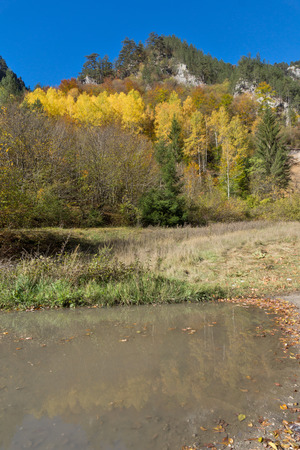 yellow trees: Reflection of Yellow trees in water in  Buynovsko gorge, Rhodope Mountains, Bulgaria