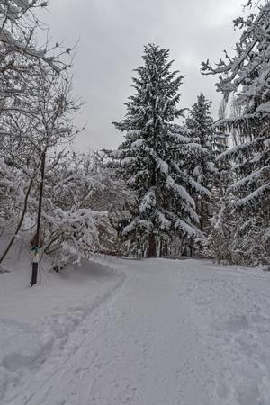 Winter mit Schnee bedeckten Bäume in South Park in Sofia, Bulgarien