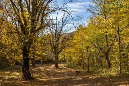 Autumn Landscape with yellow near Devil town in Radan Mountain, Serbia