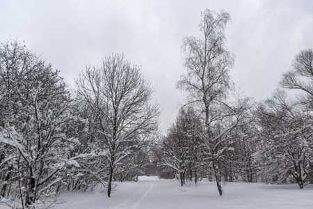 Winter Landscape with snow covered trees in South Park in city of Sofia, Bulgaria
