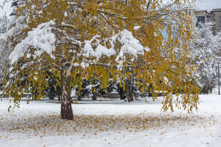 Winter view with snow covered trees in South Park in city of Sofia, Bulgaria