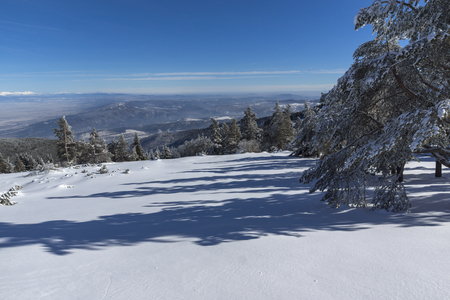 Amazing winter landscape of Vitosha Mountain, Sofia City Region, Bulgaria