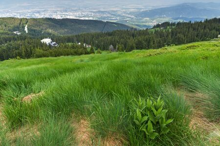 Summer Landscape with green hills of Vitosha Mountain, Sofia City Region, Bulgaria 版權商用圖片