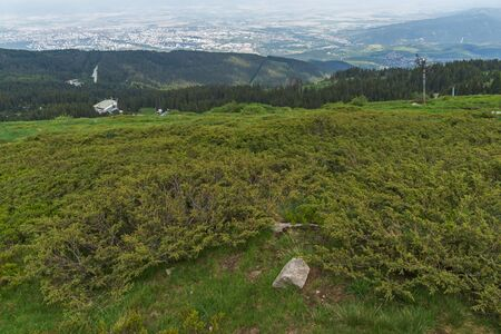 Summer Landscape with green hills of Vitosha Mountain, Sofia City Region, Bulgaria 写真素材