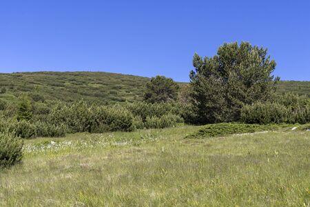 Summer landscape from hiking trail to Belmeken Peak, Rila mountain, Bulgaria