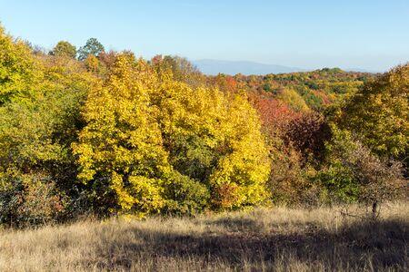 Autumn view of Cherna Gora (Monte Negro) mountain, Pernik Region, Bulgaria Zdjęcie Seryjne