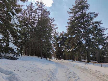 Winter view of Byala Cherkva region at Rhodopes Mountain, Plovdiv Region, Bulgaria