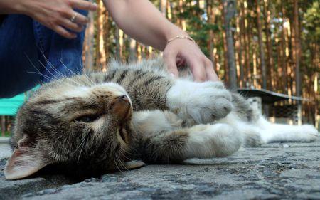caress: Cat enjoyd of human caress