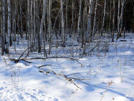 Winter landscape Stock Photo - 6248397